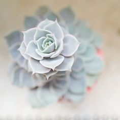 •Succulent• Green and simple beautiful succulent 💚🌱🌿🌵💚