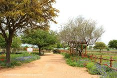 https://livelifebehappytravel.blogspot.com/2018/02/tour-of-wildseed-farms-in.html