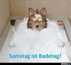 Sauberer #Hund - sauberes #Bad: Wie Sie nachher alles wieder #sauber und #ordentlich wird erfahren Sie hier in diesem #Buch: www.aufgeraeumt-fuer-immer.de/produkte