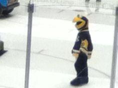 Pittsburgh Penguins Stadium: Ice Burg Mascot