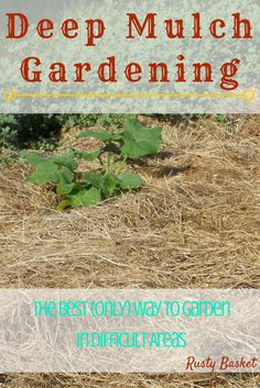 Gardening is hard! Let this method of deep mulch gardening make it a whole lot easier! Read all about my experience with switching to this method.