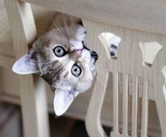 Did anyone ever tell you that you look more interesting upside down?