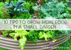 In a small food garden, clever design & careful plant choices are vital for success. 10 space-saving ideas to help you optimise your harvests. Herb Spiral, Growing Peas, Fruit Picking, Starting Seeds Indoors, Plant Labels, Seed Starting, Edible Garden, Container Plants, Container Gardening