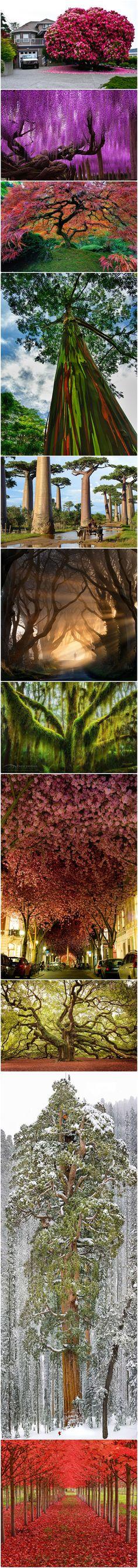 杜鵑花-加拿大 老紫藤-日本 日本楓樹-俄勒岡州波特蘭 南極山毛櫸披著掛莫斯在俄勒岡州 櫻花樹在德國波恩 天使橡樹在約翰島在南卡羅來納州  第三大巨型紅杉樹在世界上,美國加州  槭樹隧道在俄勒岡州 彩虹桉樹在夏威夷考艾島 猴麵包樹,馬達加斯加 黑暗樹籬在北愛爾蘭