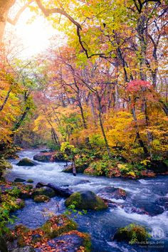 Japan Tohoku oirase stream Momiji Autumn photography