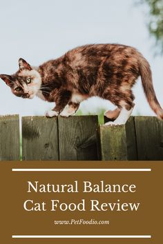 Natural Balance cat food Healthy Cat Food, Oat Groats, Dried Potatoes, Fat Cats, Cat Lovers, Natural, Animals, Animales, Animaux