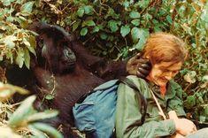 Dian Fossey insieme ad un gorilla di montagna.  Immagine reperita su google.