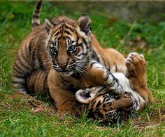 All Animals Are My World