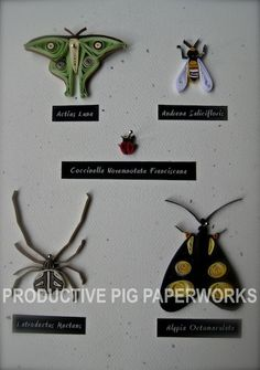 Insects Collection B Quilling