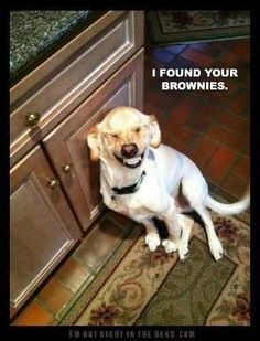 Cheesy dog ate your brownie