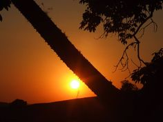 Por do sol no tronco
