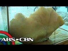 """Filipino fisherman unknowingly found the """"world's largest pearl"""", estimated worth of $100M – BlogBourne"""