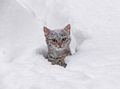 Deep In the Snow