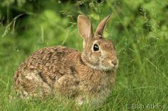 awww little bunny