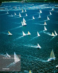 Australia - Sydney to Hobart yacht race by Mary Evans