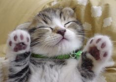 12 surprising cat facts from Japanese Internetusers | RocketNews24
