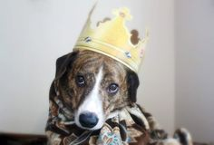 sweet little prince Dog Costumes, Prince, Sally, Sweet, Dogs, Photography, Friends, Candy, Amigos