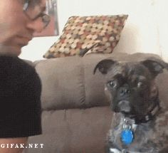 Human! What the F*ck!?