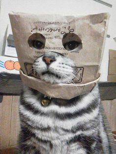 I iz a cat burger-ler