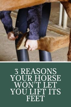 Reasons Your Horse Won't Let You Lift Its Feet Have trouble lifting your horse's feet? We put togeth Horse Stalls, Horse Barns, Western Horse Tack, Western Saddles, Horseback Riding Tips, Haflinger Horse, Horse Care Tips, Horse Training Tips, Natural Horsemanship