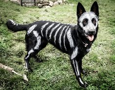 Artist Bryn Anderson Creates a Skeleton Dog  (non toxic paint!)