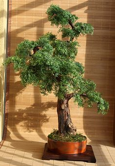 Artificial bonsai cedar Zokei