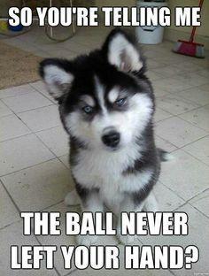 Smart dog!! ;)