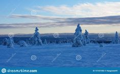 Photo about Blue hour winter landscape. Winter wonderland in Hedmark county Norway. Frozen trees on hedmarksvidda. Image of hedmark, wonderland, norway - 131431502 Images Of Frozen, Blue Hour, Winter Wonderland, Statue Of Liberty, Norway, Trees, Stock Photos, Liberty Statue