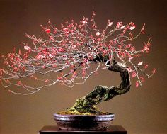 Wild Flowering Cherry Bonsai (Prunus). The artist has managed to create a great sense of movement with this very old specimen.