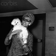 Of course she had a little white poodle!  Sophia Loren
