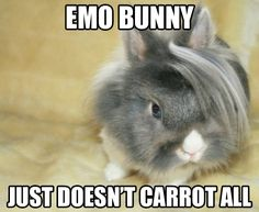 LMAO! This bunny is adorable.