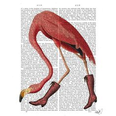 Picture showing FabFunky - Flamingo in Pink Boots, Antiquarian Book Print, 20.3 x 25.4cm