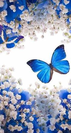 Pretty Wallpapers For IPhones Wallpapers) – Wallpapers Blue Butterfly Wallpaper, Flower Phone Wallpaper, Butterfly Painting, Butterfly Art, Love Wallpaper, Cellphone Wallpaper, Galaxy Wallpaper, Wallpaper Backgrounds, Iphone Wallpaper