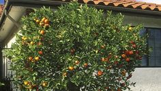 Good information about planting fruit trees