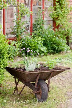 Old wheelbarrow with herbs. Love the idea!