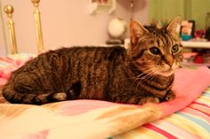 10 Things Your Cat Wants You to Know | Feline Docs