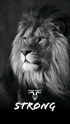 Follow @beastdesire on Instagram for more. #motivation #beast #best #beastdesire #thoughts #quotes #inspired #inspire #motivational #motivated #success Black Background Wallpaper, Black Phone Wallpaper, Lion Quotes, Animal Quotes, Motivational Quotes Wallpaper, Wallpaper Quotes, Reaper Quotes, Trippy Quotes, Attractive Wallpapers