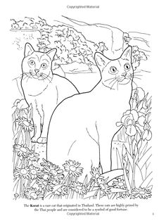 Items Similar To The Cat Lovers Coloring Book For Adult