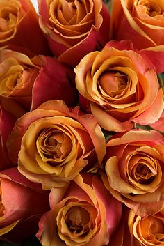 ~'Cherry Brandy' roses, in shades of orange and peach and pink~