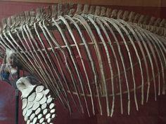 bones structure