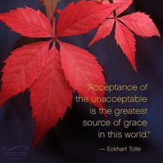 """""""Acceptance of the unacceptable is the greatest source of grace in this world. Now Quotes, Great Quotes, Life Quotes, Inspirational Quotes, Qoutes, Quotations, Wisdom Quotes, Motivational Quotes, Spiritual Awakening"""