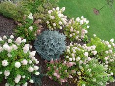 Hydrangeas in group... http://wilczagora.blogspot.com
