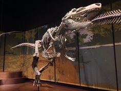 Twitter / Laelaps: Appalachiosaurus roamed the ...