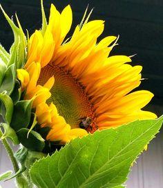 Bee and sunflower Sunflowers, Bee, Fine Art, Plants, Bees, Flora, Plant, Visual Arts, Sunflower Seeds