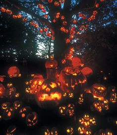 Jack O'lantern Spectacular at Roger Williams Park Zoo with my baby girl!