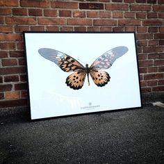 New Collection. Sommerfugl S16 70 x 100 cm fra hagedornhagen.  www.houseofbk.com