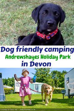 At Andrewshayes in East Devons Best Touring Motorhome Static Caravan Camping DOG FRIENDLY. We love Dogs and have a special area for their exercise. Dog Friendly Holidays, Holiday Park, Dog Walking, Dog Friends, Motorhome, Devon, Caravan, Touring, Woodland