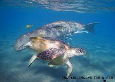 Marsa Mubarak - Marsa Alam - Snorkeling with dugong and turtles - Next door to hotel
