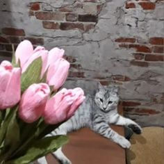 OksanaT (@tvorcheskaia_m77) • Фото и видео в Instagram Cats, Animals, Gatos, Animales, Animaux, Animal, Cat, Animais, Kitty