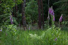 Furlbachtal bei Augustdorf in der Nähe von Bielefeld, Ostwestfalen - urtümliche Natur in der Senne soweit das Auge reicht.    FOTOQUIP Blog - Fotografie ist unsere Leidenschaft- FOTOQUIP Blog